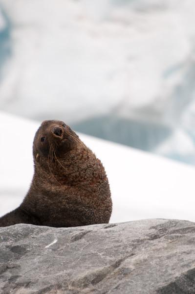Antarctica 2015 (1 of 99).jpg