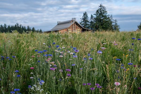 Soter Vineyards- Wildflowers