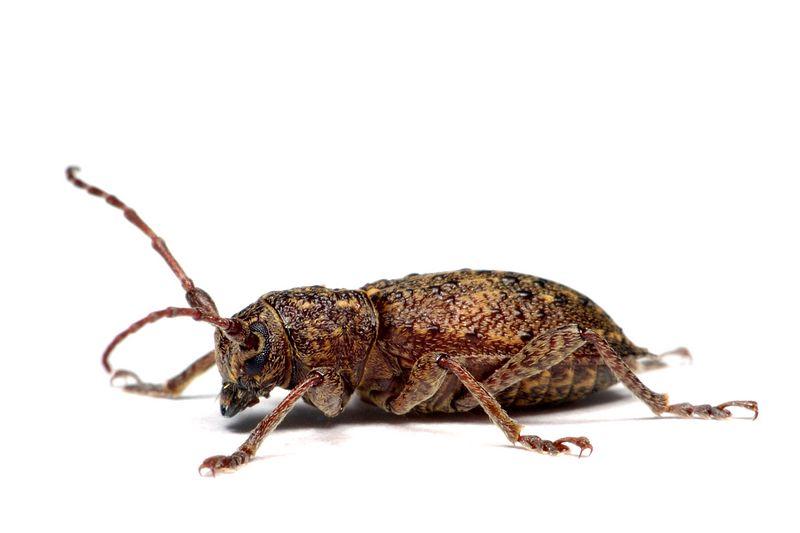 strangebug.jpg
