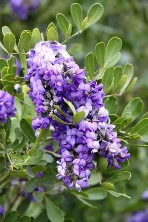 Texas Flora