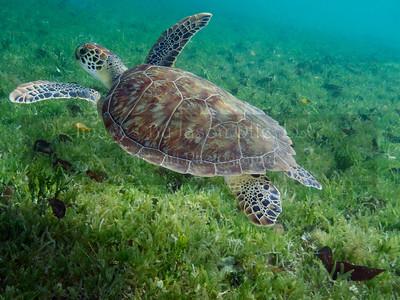 Everybody Loves Turtles