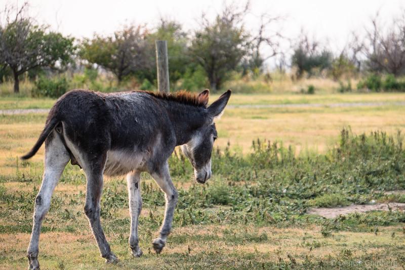 donkeys at Circle View Guest Ranch