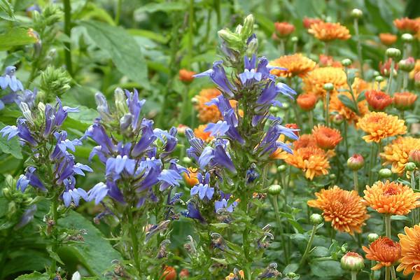 Gardens & Flowers Past Years
