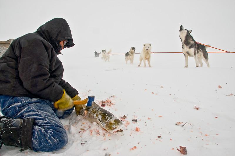 Ivakkak course de traîneau à chien edition 2010   journee white out