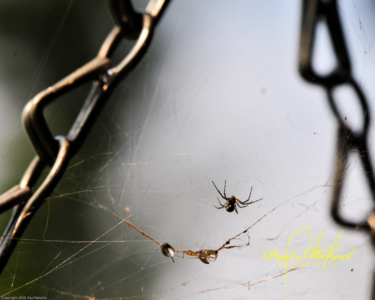 Spider in hanging plant.