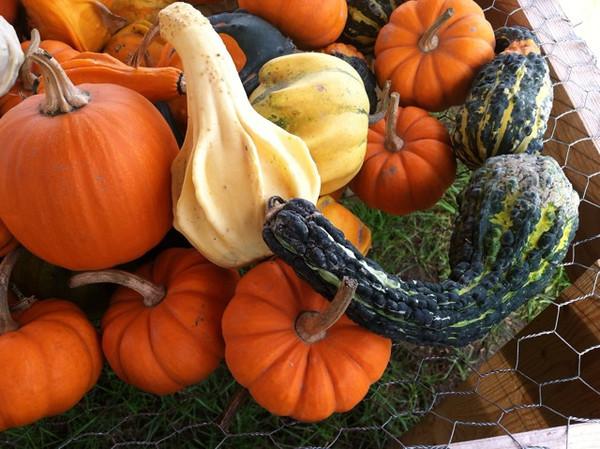 Strange Gourds