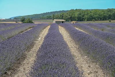 De Lavendelvelden van Sault