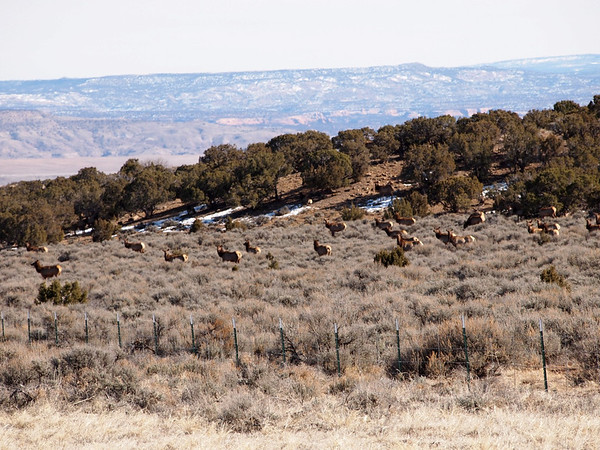 Desert Drive, Elk, Feb 2012
