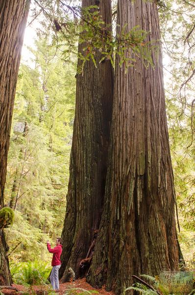 20141015_Redwoods_0068.jpg