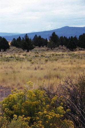 Butte Valley Wildlife Area: Trips