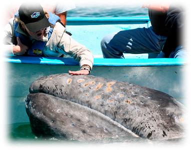 Other EZ Baja Whale Photos
