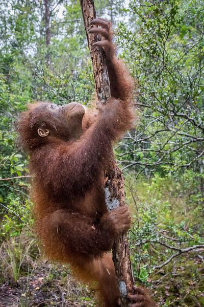 Borneo-2267-2.jpg