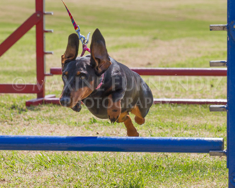 Dawn Agility 7 May 2016-3332.jpg
