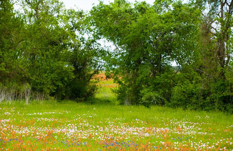 2016_4_9 Texas Wildflower Shoot-8474.jpg