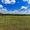 pasture with clouds forest backdrop 2