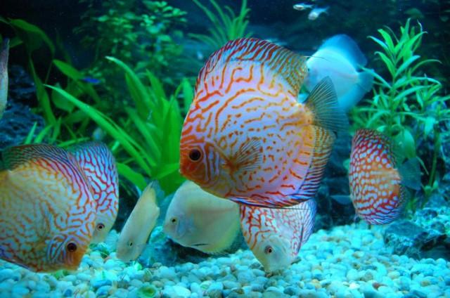Cá Cảnh Châu Hùng