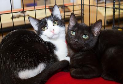 OCARC Cats & Kittens II