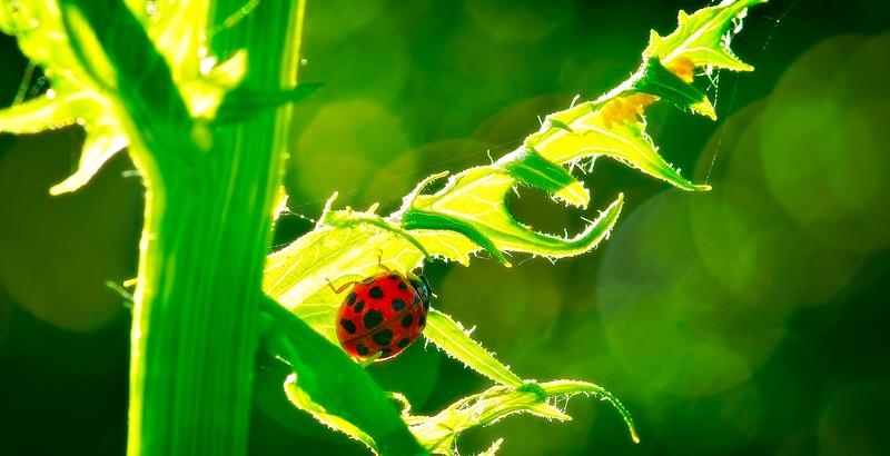 Bugs and Beetles - 49.jpg