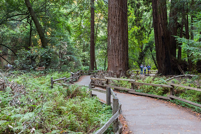 Muir Woods NM/Mill Valley, CA