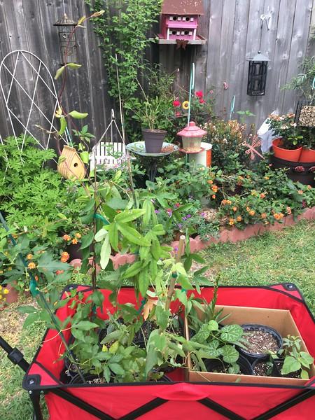 TX Native Plants & Extras