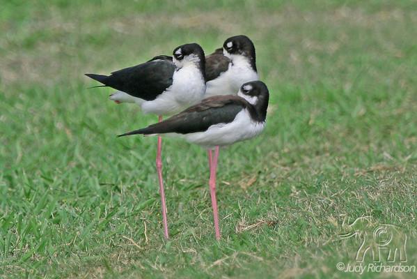 Birds Around Hawaii
