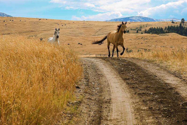 Horses 21.jpg