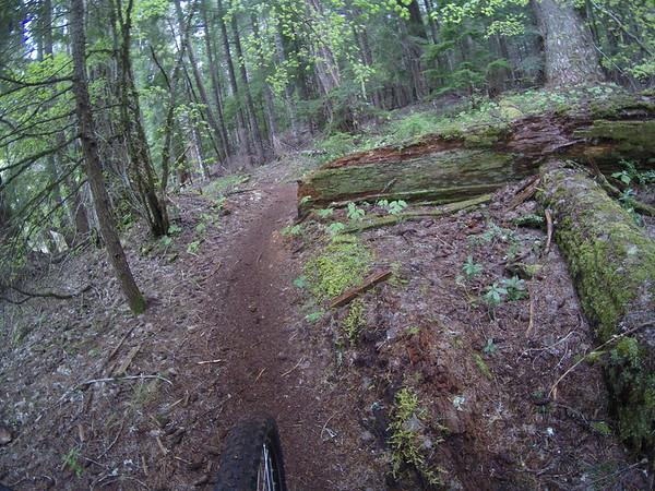 Upper McKenzie River Trail