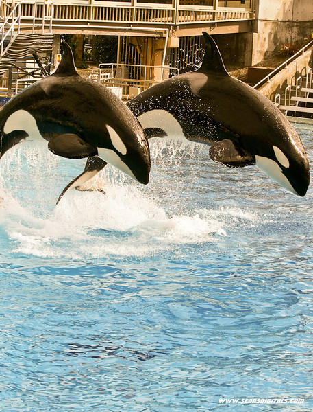 Seaworld-Zoo-20.jpg