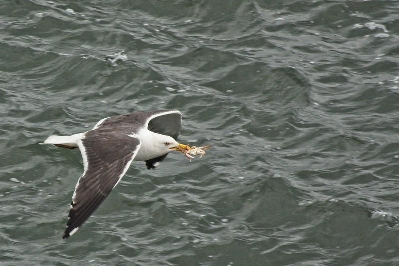 seagull copy.jpg