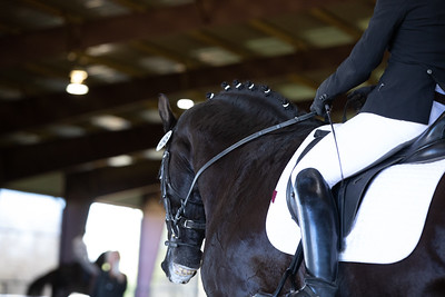 Horse 498