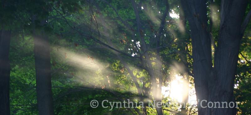 morning light.jpg a.jpg