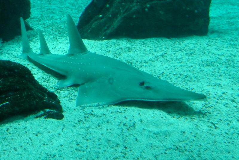 Lazy Shark. Oceanário, Parque das Nações, Lisbon