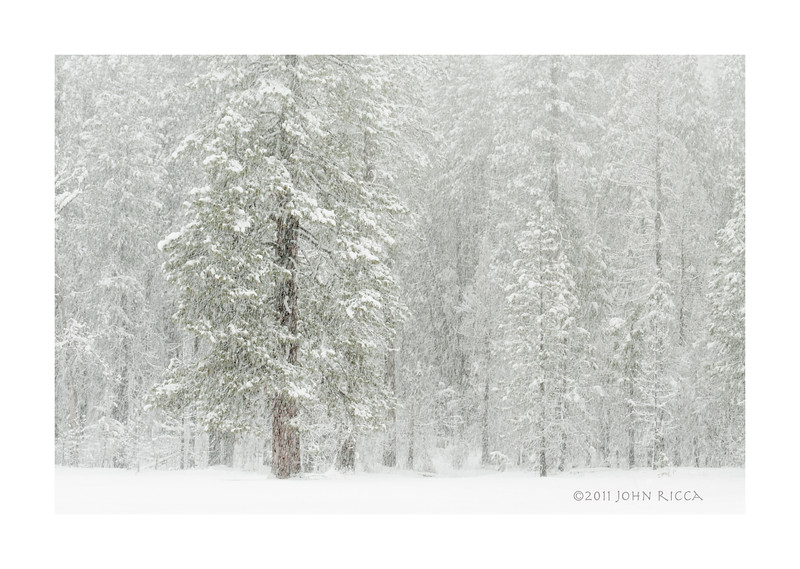 Silent Storm 2.jpg