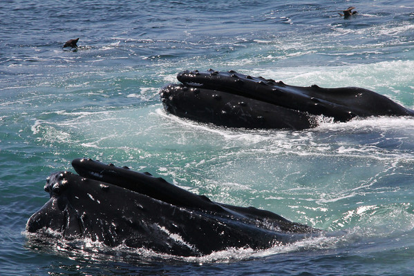 Whales and Whale Trips