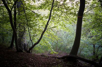 Wandelroute Hoosden