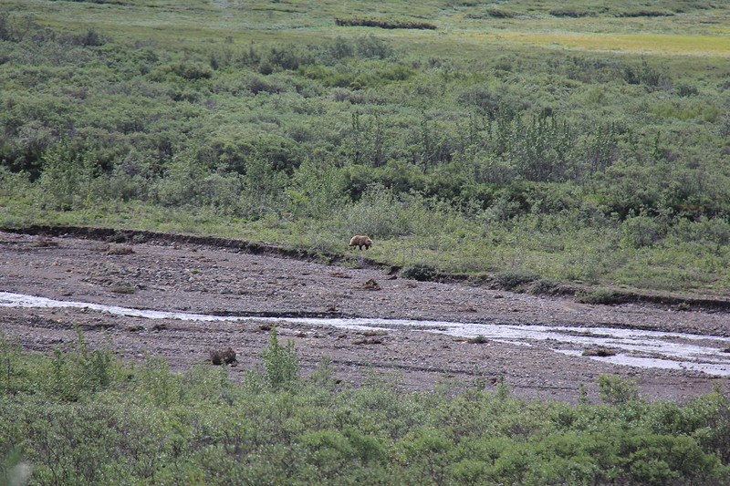 20160710-035 - Denali NP-Kantishna Roadhouse Bus Tour-Bear.JPG