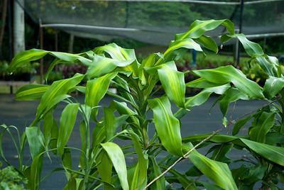 Waimanalo Farm Vegetation