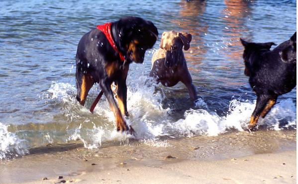 2003 Summer - Cape Cod