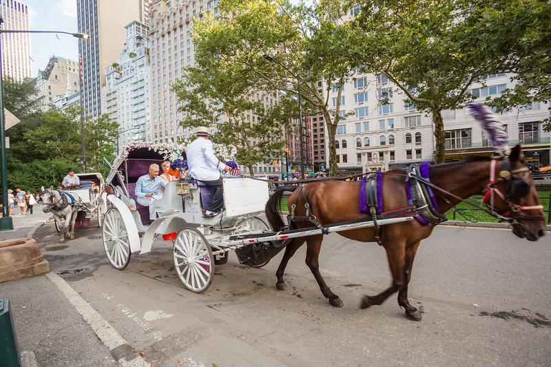 Central Park Wedding - Beth & Nancy-169.jpg
