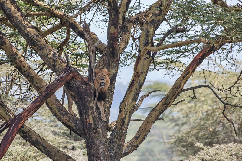 Kenya 8235.jpg