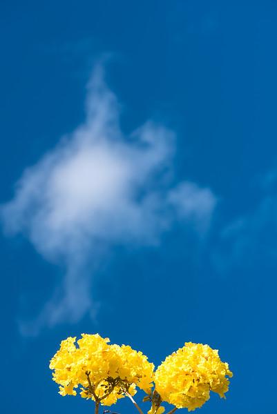 yellow-3_30261202992_o.jpg