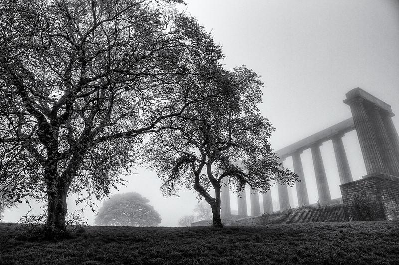 treefogcoloumn.jpg