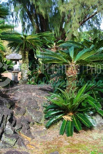 Palms-and-Lava-Rock_batch_batch.jpg