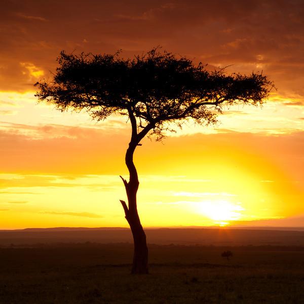 Sunrise in The Mara.