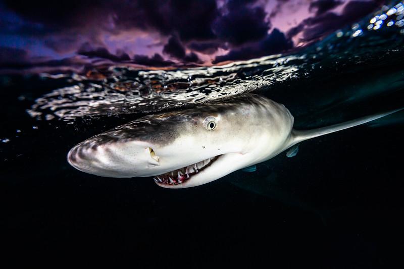 IdolJennifer_sharkSafari-55.jpg