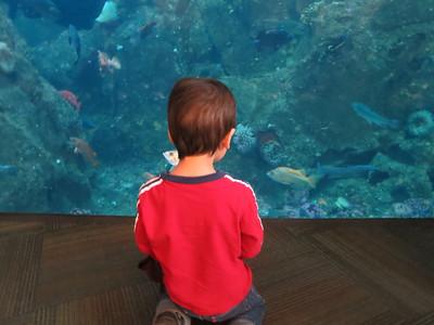 aquarium2012