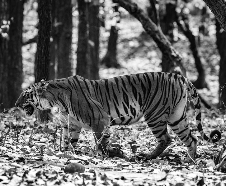 India_April_2019-45.jpg