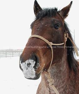 018-horse_winter-madison_co-01feb04-c1-1303