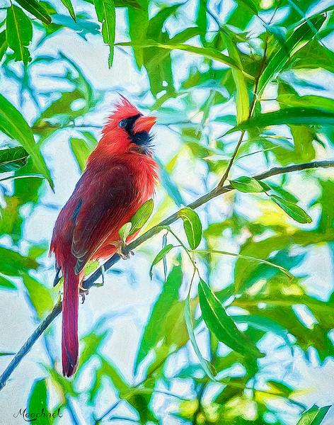 cardinal_DSC4069-copy.jpg