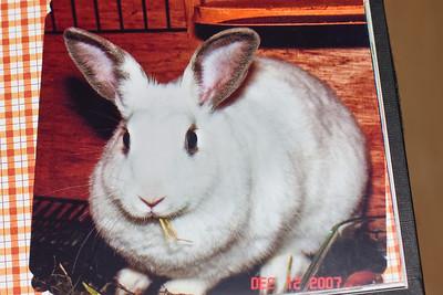 131110 Dust Bunny Memorial